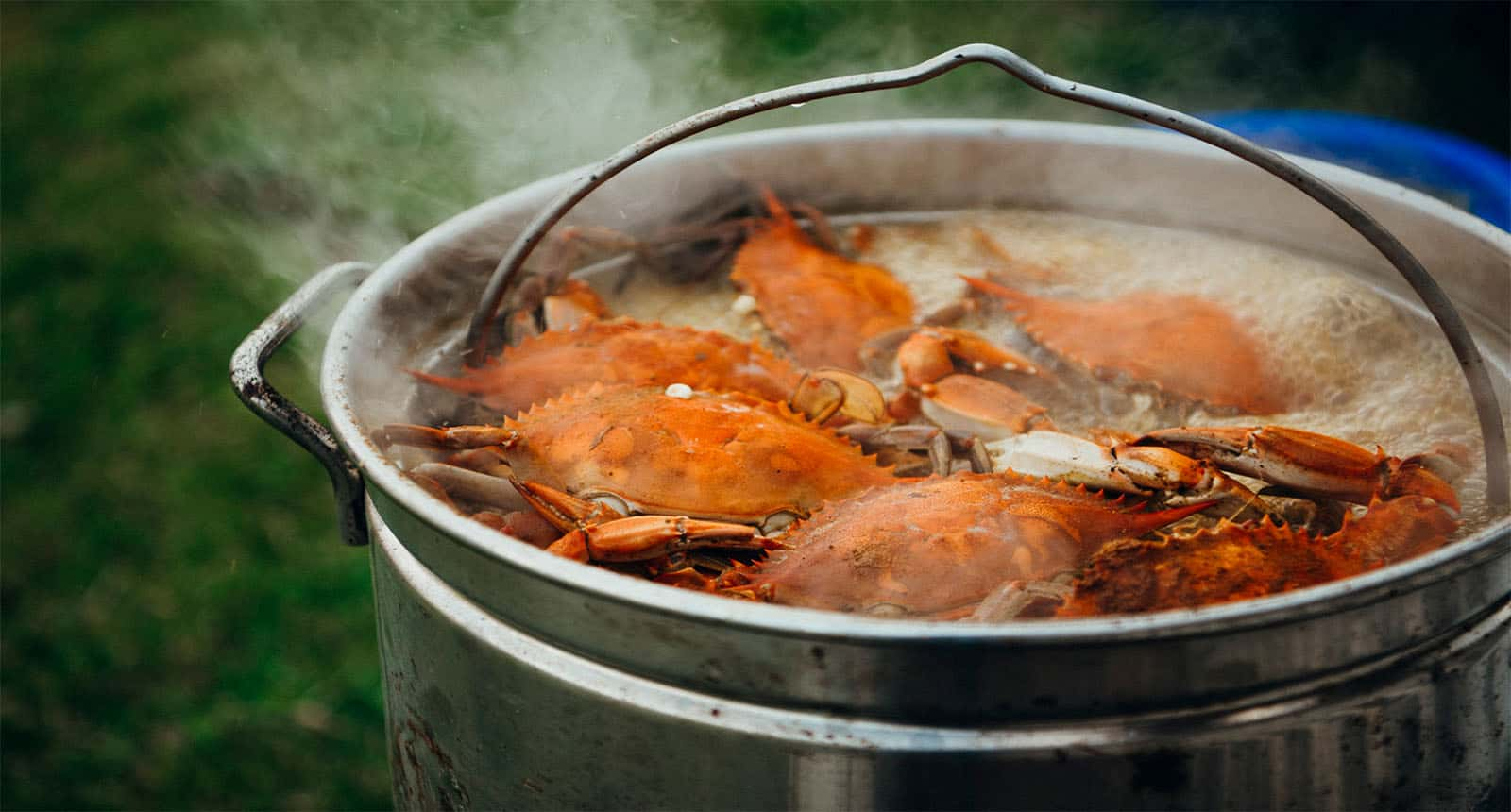 Cooked Blue Crabs Boil Giant